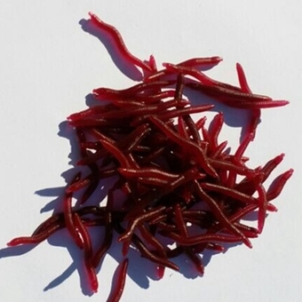 50Pcs Red Worm EarthWorm Fishing Soft Lure Tackle Baits Bass Trout Bream 4cm (intl)