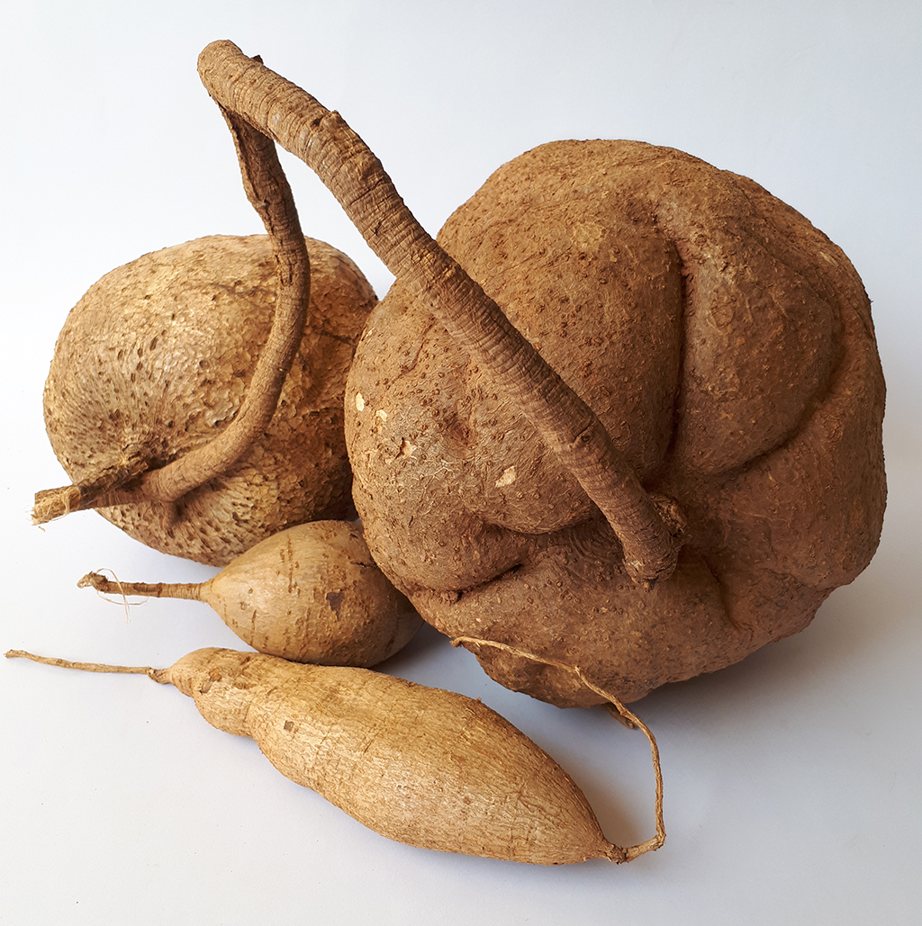 What is Pueraria Mirifica Used For?